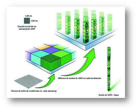 Global ADN y chips gen ticos Market