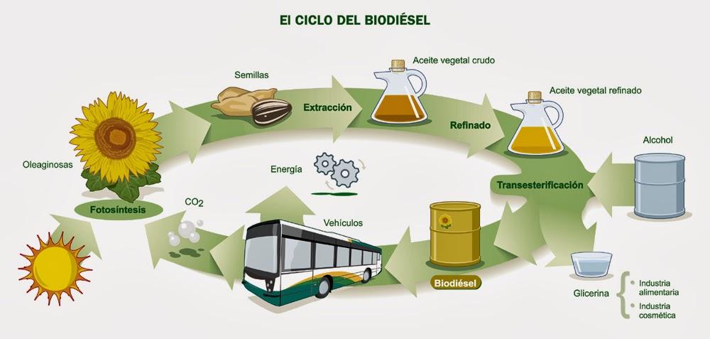 Global Combustible biodiesel Market