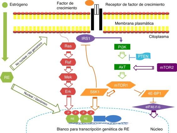 Global Inhibidores de cáncer mTOR Análisis de crecimiento del mercado, pronósticos con coronavirus (COVID-19) Análisis de impacto hasta 2026 : Abraxis BioScience, Adimab, Celgene Corporation, Celator Pharmaceuticals