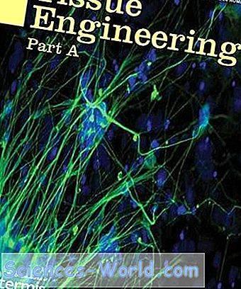 Global Reparaci n de nervios biomateriales Market